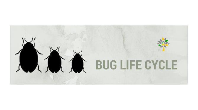 bug_life_cycle-670x380-670x372